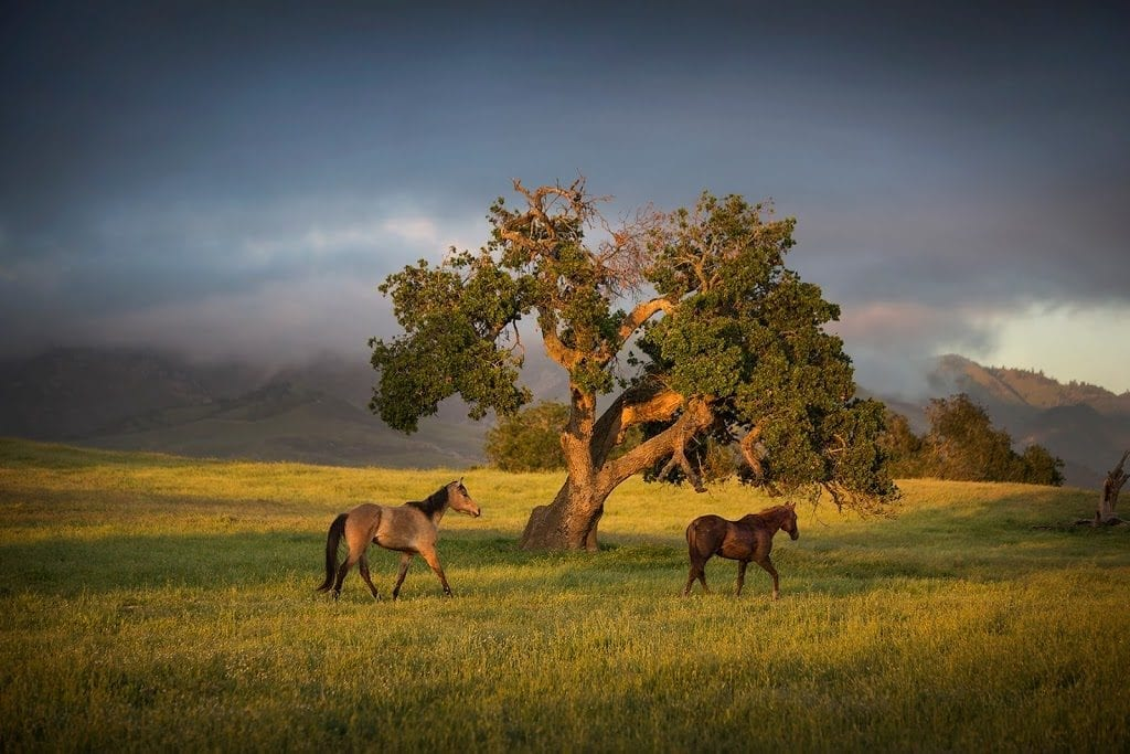 Fess Parker Home Ranch