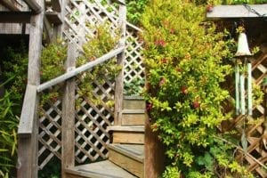 Stairs to the Treehouse Cottage